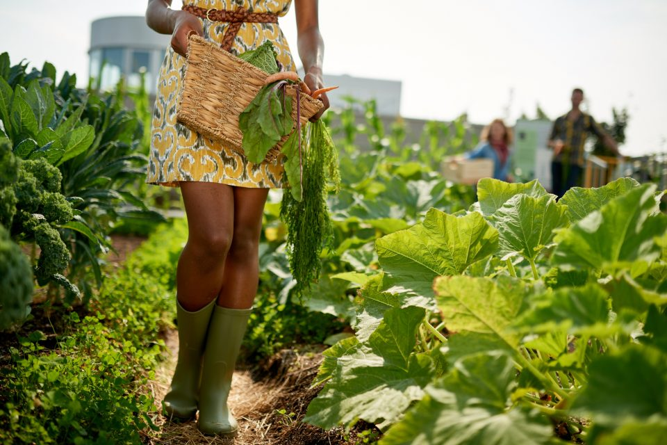 Researchers from Arizona State University investigated urban agriculture to see if local gardens in Phoenix, Arizona, could help the city meet its sustainability goals.