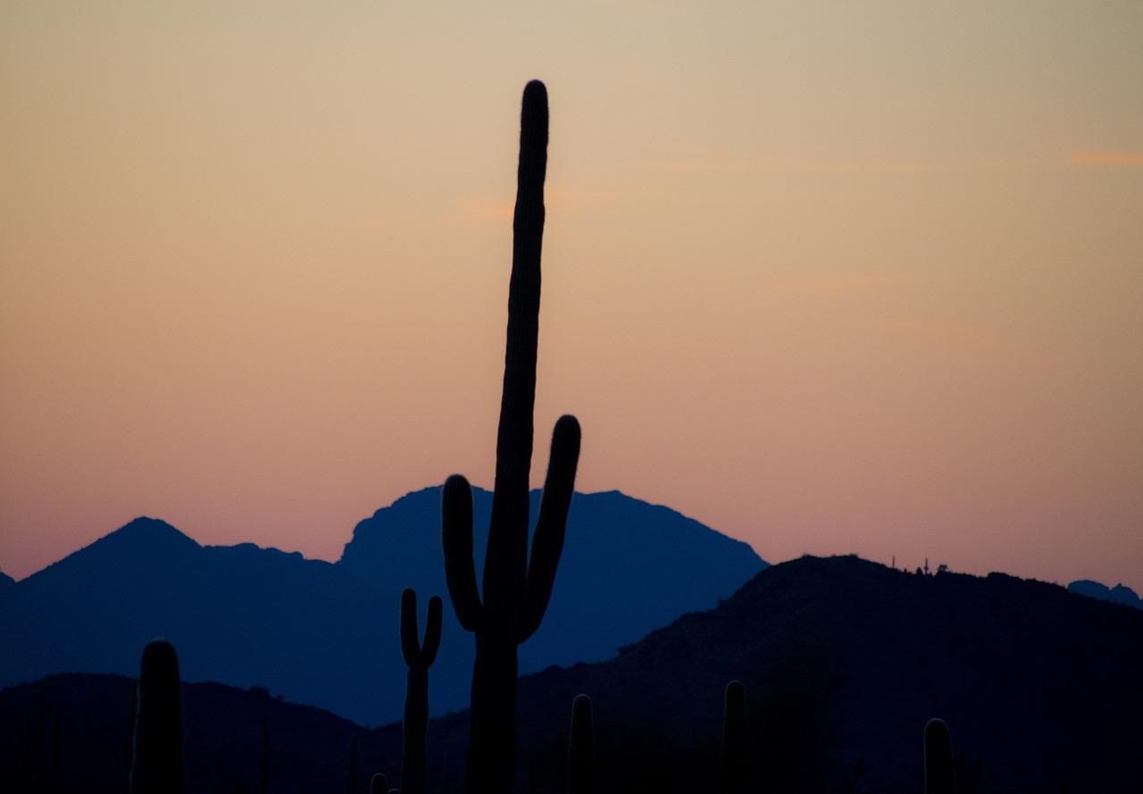 saguaro cactus tree