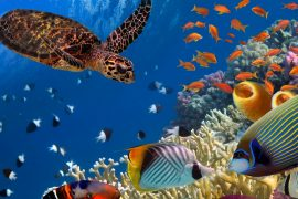 Marine species are shifting away from the equator in response to rising ocean temperatures