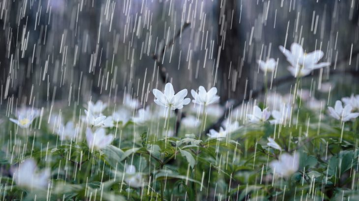 Spring rainfall is an unexpected source of pollen • Earth.com
