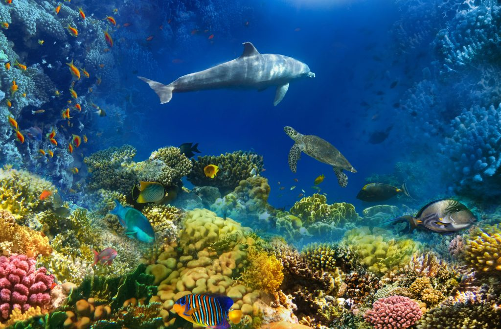 Marine life in the deep sea will soon experience drastic changes - Earth.com