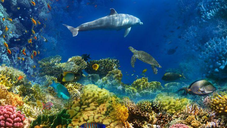 ILUSTRASI kehidupan laut.