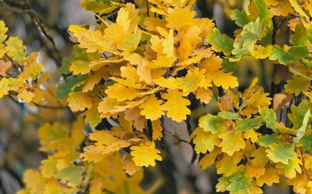 tree leaf id