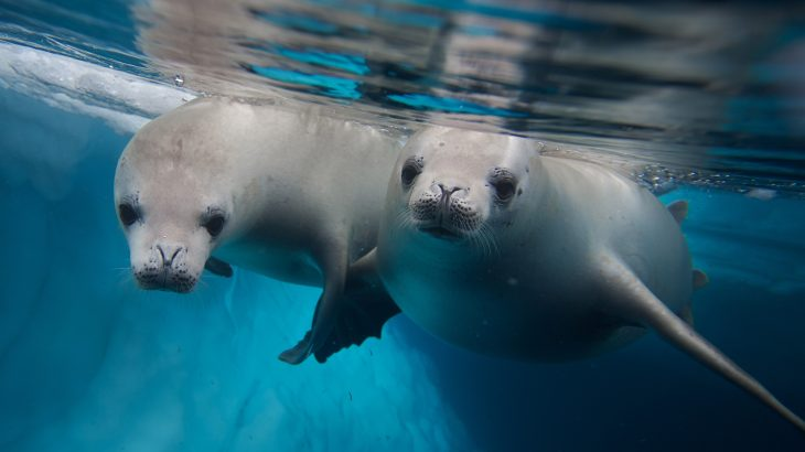 In a new study from Virginia Tech, experts have investigated the factors which influence infectious disease in marine mammals.