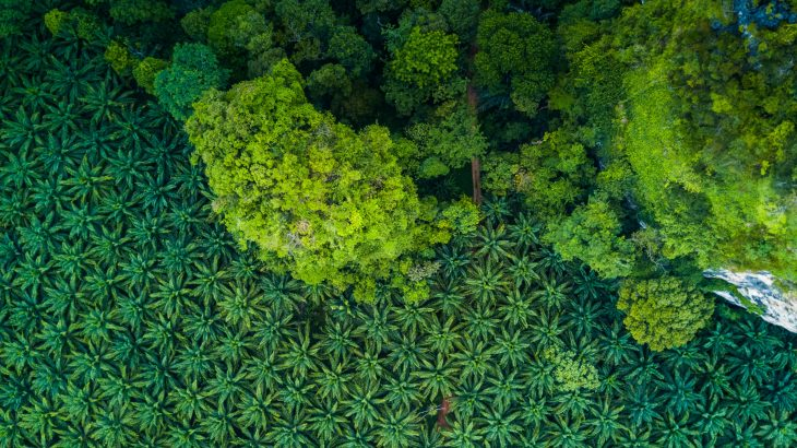 A new study from the University of York emphasizes the enormous value of protected forest areas in oil palm plantations.