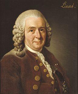 Linnaeus Botanist