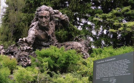Linneaus Botanist Monument