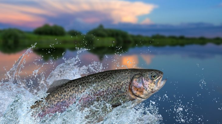 Fish can pass along the adverse effects of chemical contaminants to future generations, according to a new study from Oregon State University.