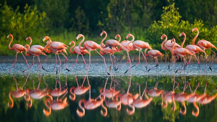 Among the Australian birds that have disappeared are three species of pink flamingos that thrived in the outback across lush green landscapes for about 25 million years.