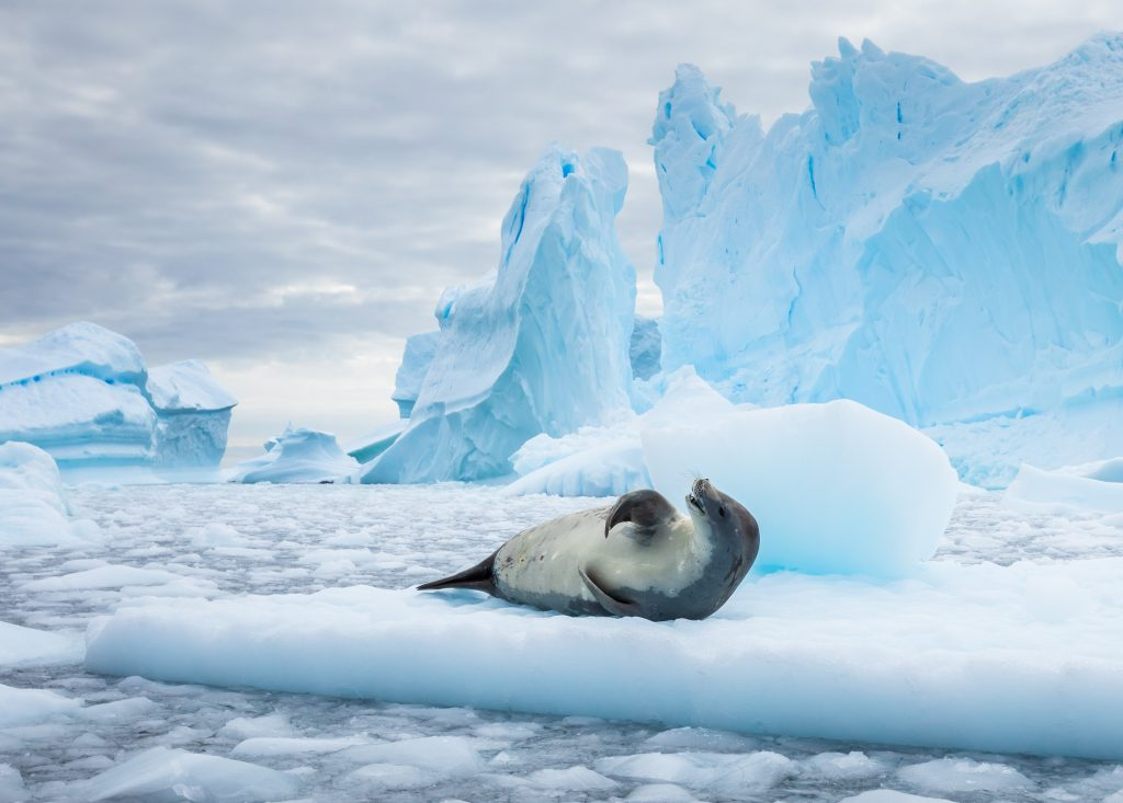 Unknown ocean currents discovered with the help of seals • Earth.com - Earth.com