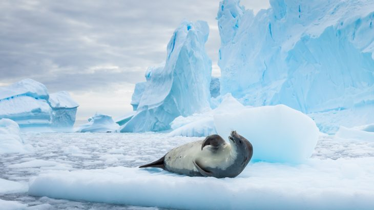 For the first time, importantocean currents have been observed in the Southern Ocean with the help of robots and scientific sensors carried by seals.