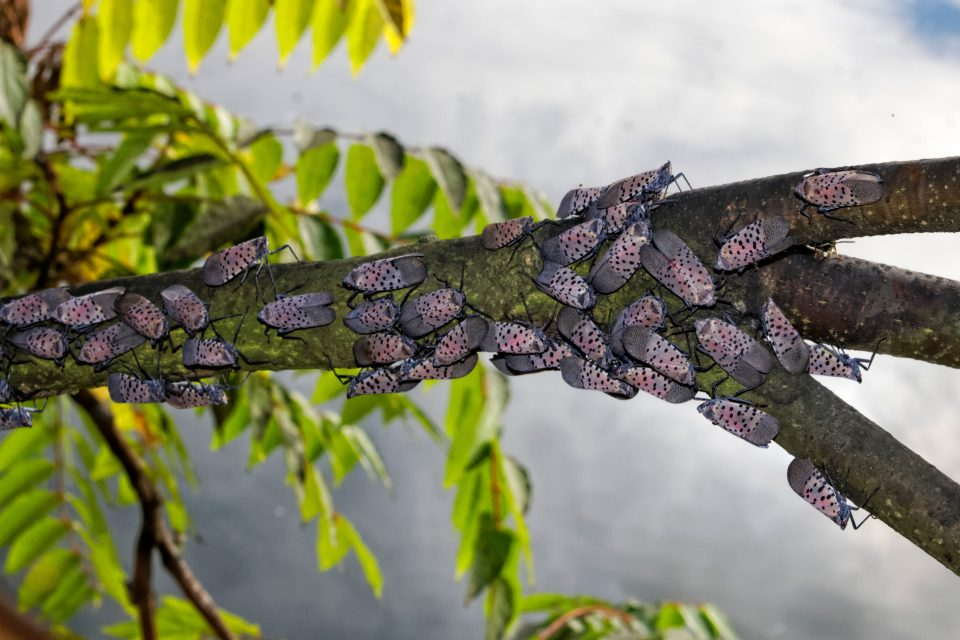 An international team of scientists is warning about the growing threats of invasive species.