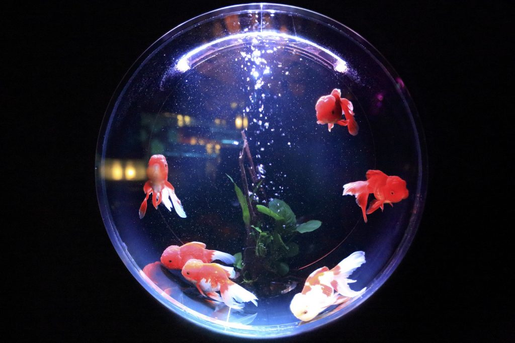 water aquarium