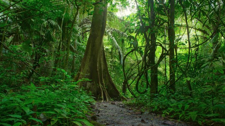Scientists at the University of New South Wales report that over the next five decades, it will become too hot for many tropical plant species to germinate.