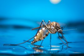 Experts have demonstrated that a single gene is all it takes to transform a female mosquito into a male mosquito.