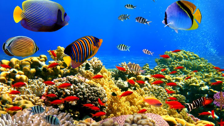 Researchers at KAUST are describing the valuable role of coral reefs in the Red Sea.