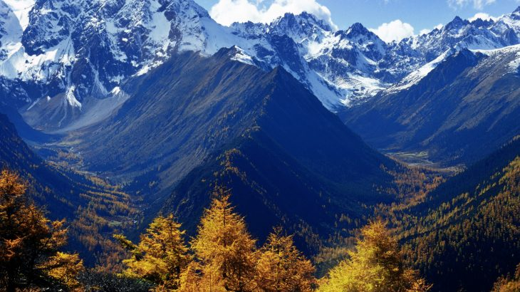 The remarkable diversity of plants and trees surrounding the Tibetan Plateau can be traced back 30 million years to the formation of new mountain ranges followed by intense monsoons, according to a new study published by AAAS.