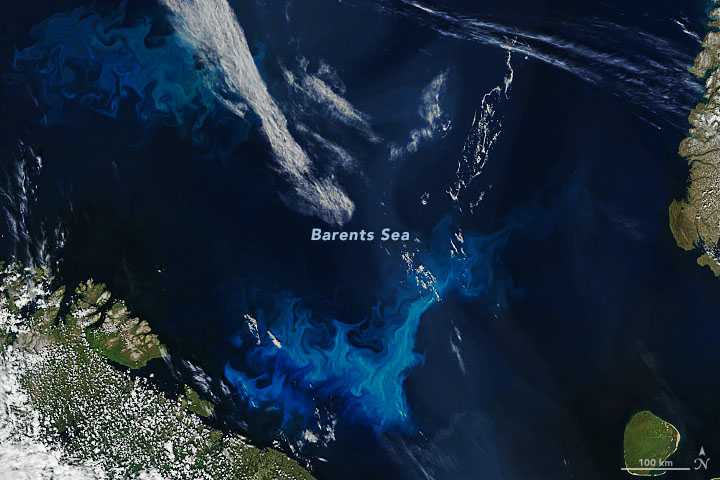 Today's Image of the Day from NASA Earth Observatory features a phytoplankton bloom in the Barents Sea, north of Scandinavia and Russia.