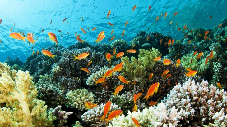 Coral reef fish communities that are exposed to heat are much less diverse and abundant compared to fish in nearby reefs with less extreme temperatures.