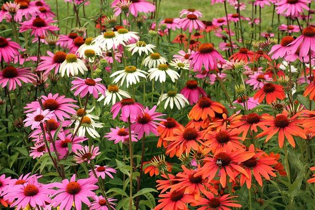 paesaggistica, fiori di campo
