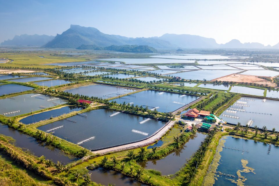 Seafood consumption has reached an all-time high in 2020, and experts are investigating ways to make aquaculture more sustainable.