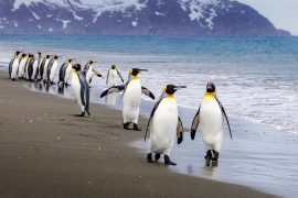 A new study from the British Antarctic Survey reports that scientists have discovered 11 new emperor penguin colonies in Antarctica using satellite mapping technology.