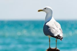 It turns out that the annual economic contribution of seabird poop, also known as guano, exceeds one billion dollars.