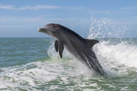 A team of scientists led by Florida Atlantic University has found high levels of toxic pollutants in marine animals along the southeastern coast of the United States.