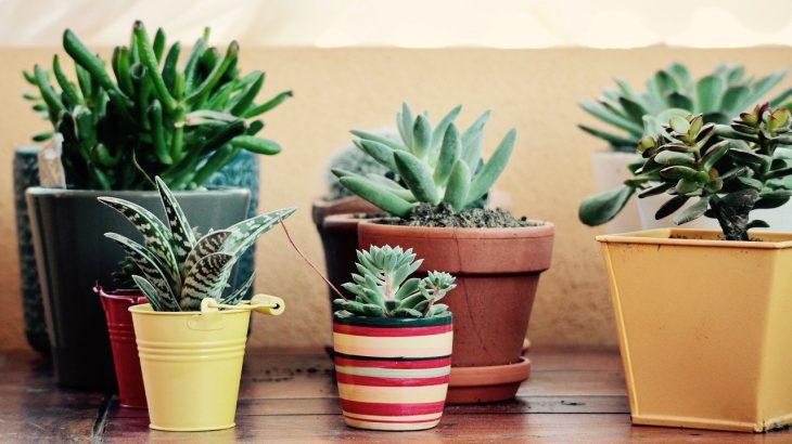plant pot houseplant succulent