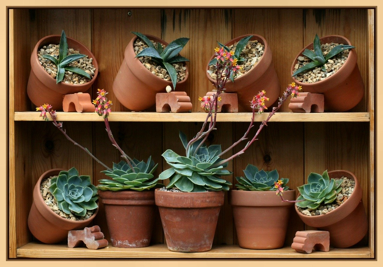 terracotta plant pot houseplants