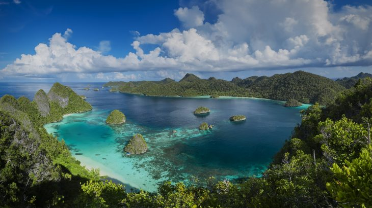 A new study has revealed that New Guinea has the most plant diversity of any island in the world.