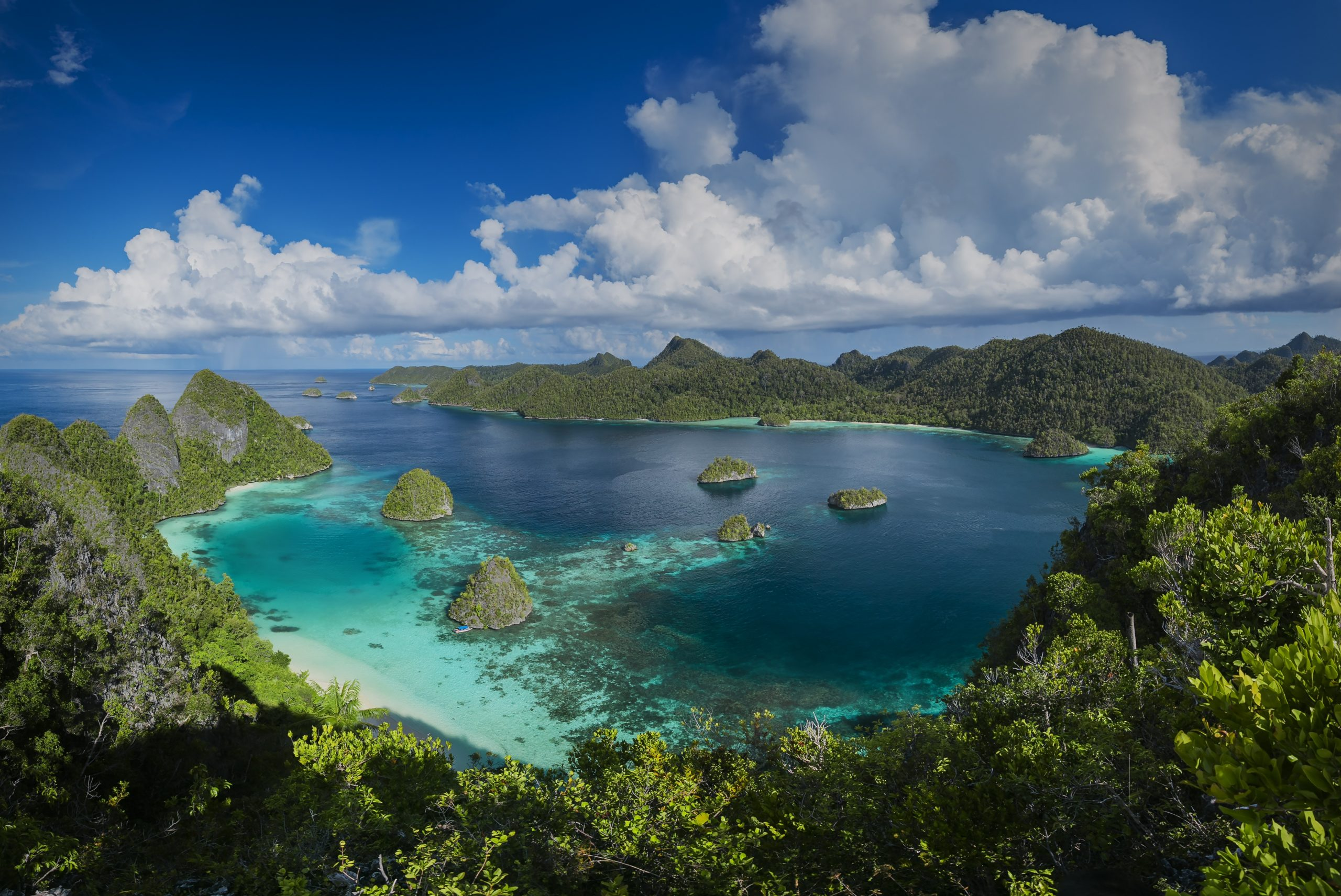 New Guinea is the world's richest island for plants • Earth.com - Earth.com
