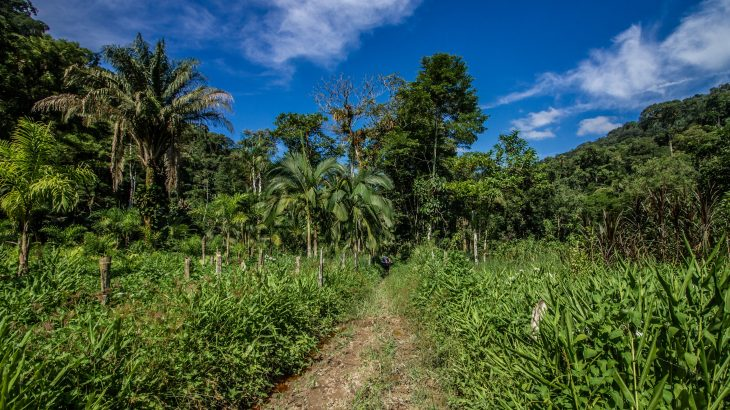 Tropical forest soils are more sensitive to climate change than previously realized.