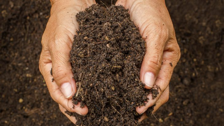 In a new study from the University of Georgia, researchers have determined that soil pollution is also a key contributor to antibiotic resistance.
