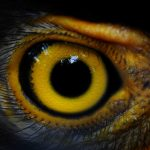 A new study published by Frontiers has revealed that bird and reptile tears are very similar to human tears.