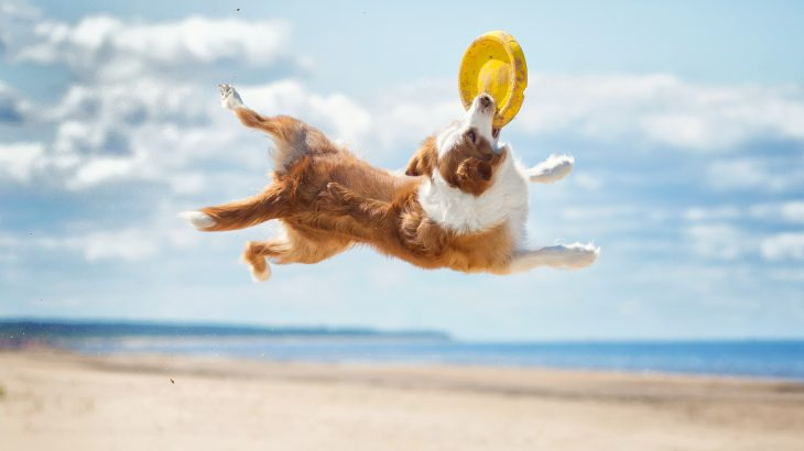 A new study from the University of Helsinki has demonstrated that active dogs are less afraid of the world.