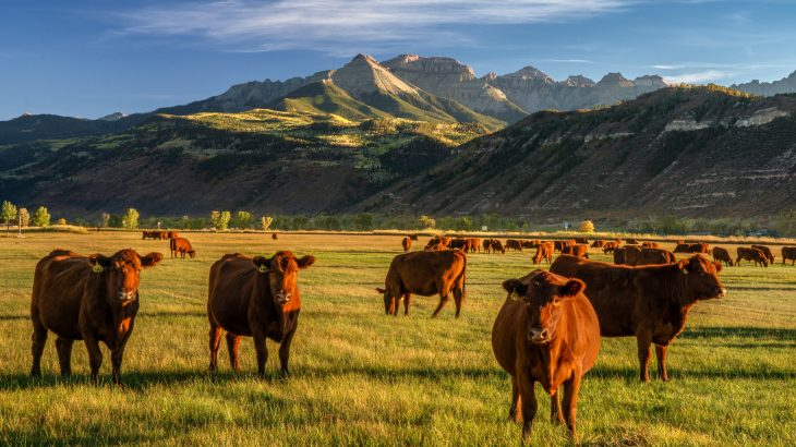 Many farmers are turning to regenerative ranching, which incorporates various organic and sustainable practices to restore degraded soil, boost food production, and improve the quality of crops