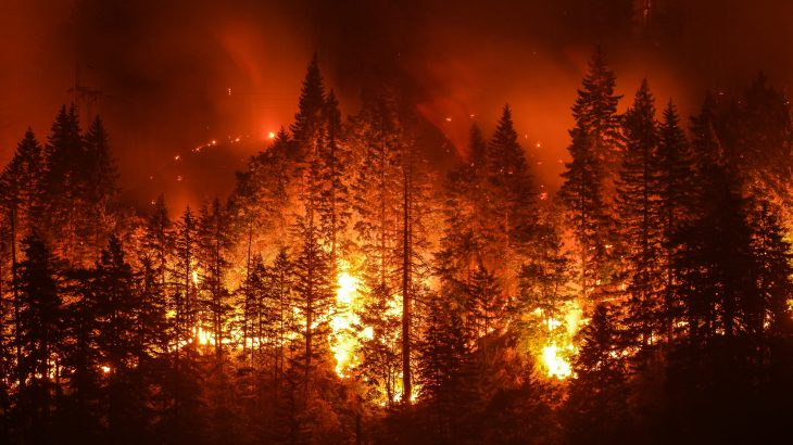 The researchers found that when forests burn across the Southern Rocky Mountains, many will never recover, but will instead transition into grasslands and shrublands.
