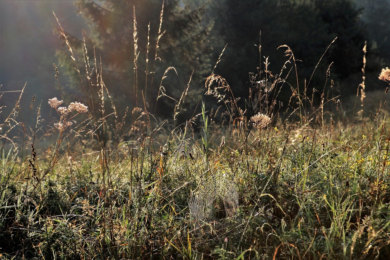 grass field bugs