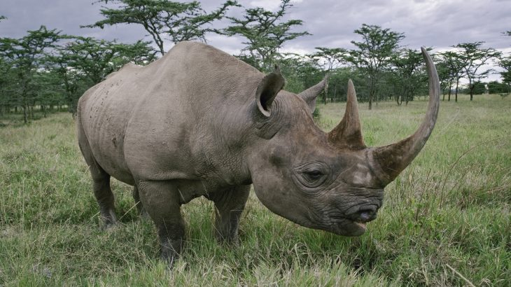 Experts have developed new technology to track black rhinos in Namibia and protect the endangered animals from poachers.
