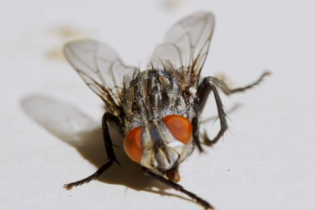 Today's Video of the Day from the Penn State College of Engineering describes how fruit flies rely on eye movements to coordinate their flight.