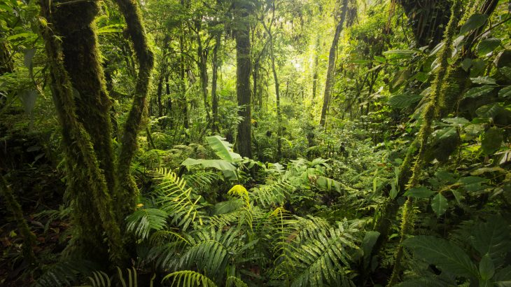 Latin America is home to at least a third of the world's biodiversity and is more than twice as rich in plant species as tropical Africa, according to experts at the Missouri Botanical Garden.