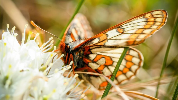 Experts at the University of Helsinki are describing how insect communities are transforming in the Arctic as a result of climate change.