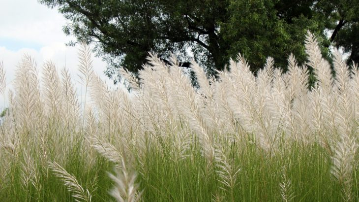 The introduction of invasive species through commercial transport is becoming increasingly common, and a new study has identified a potential source of nonnative plant invasions