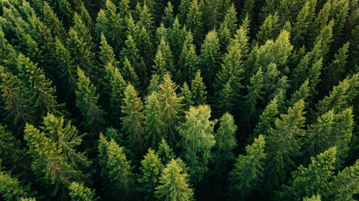 The research indicates that pine needles could serve as a simple and inexpensive source for measuring air pollution.