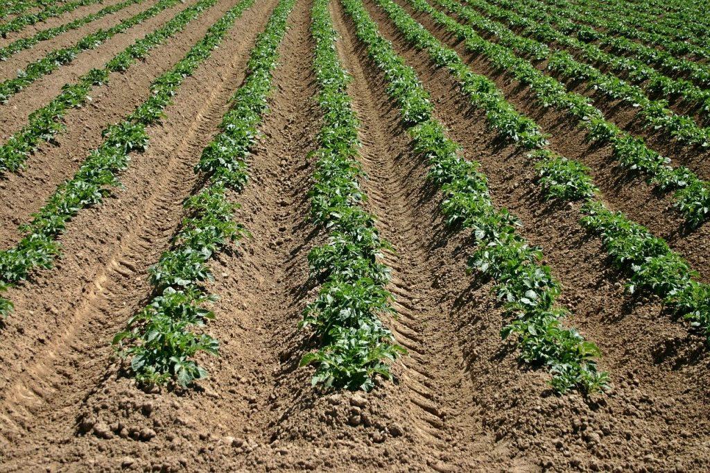 crop furrows