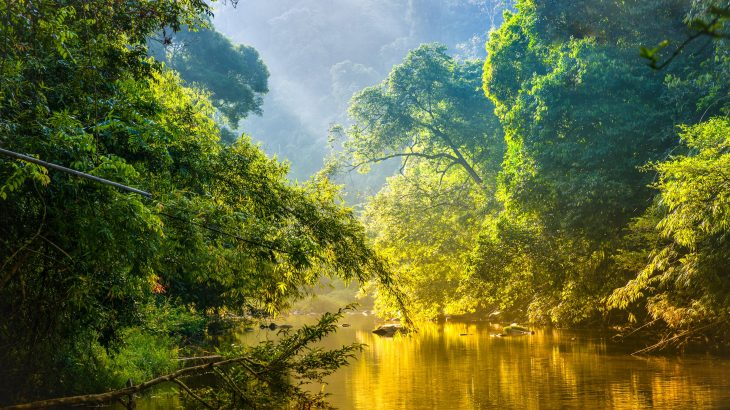 The Amazon is now closer to an irreversible tipping point than any other time in the last 100,000 years, according to Professor Mark Bush of the Florida Institute of Technology.