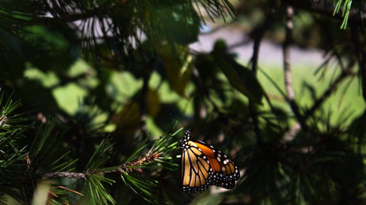 If you want to help protect butterflies from climate change, provide them with more shady places to keep cool, according to a new study from the University of Cambridge.