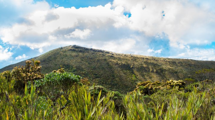 The researchers found that high-elevation biodiversity hotspots will be substantially reduced over the next three decades without urgent intervention.