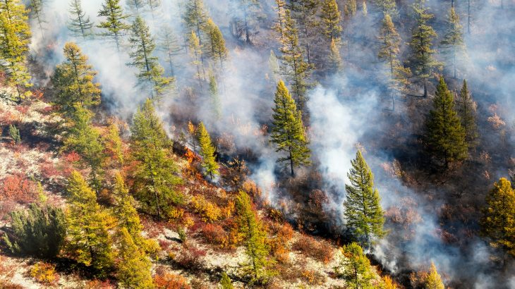 The dynamics of Arctic fires are changing, and there will be consequences for the global climate, according to a new study